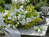 Campanula medium Poem 'White' (Marble bellflower), Alchemilla