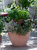Plant a double pot with herbs