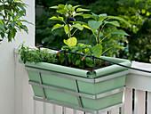 Balcony box with drip irrigation