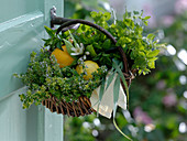 Small handle basket with thymus citriodorus, Citrus limon