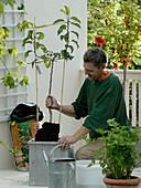 Plant a snack balcony