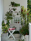 Balcony with herbs and fruits