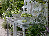 Apples 'Weißes Klarapfel', freshly harvested