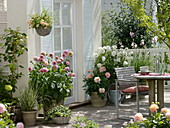 Dahlia Terrace Dahlia 'Babydoll', 'gardener'