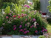 Summery dahlia flower bed