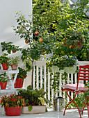 Snack terrasse with Capsicum annuum 'Medusa' (edible ornamental paprika)
