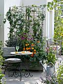 Rubus 'Thornless Evergreen' on trellis