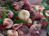 Freshly harvested vineyard peaches in flat wicker basket