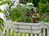 Drip irrigation for vegetables in the balcony box