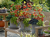 Gray pots with autumnal plants