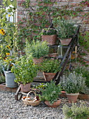 Herbs in terracotta pots on iron stairs