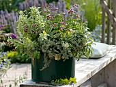 Pot of sage, basil, thyme and oregano