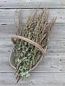 Freshly harvested mugwort (Artemisia vulgaris)