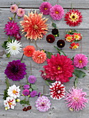 Board with various dahlia blossoms