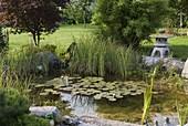Kleiner natürlich angelegter Teich mit Nymphaea (Seerose)
