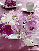 Orchids in glass bowl as table decoration