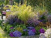 Autumn bed with asters and grasses