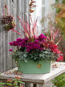 Light green metal pot planted with cyclamen, grasses and stonecrop