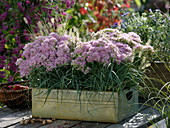 Tin box with stonecrop and grasses