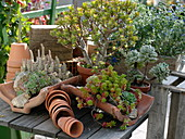 Mixed succulent plants in terracotta artifacts on wooden table