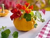 Hollowed small pumpkin with nasturtium