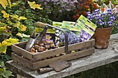 Wooden basket with flower bulbs and tool