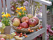 Basket with apples and ornamental apples on wooden bench