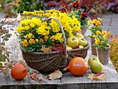Chrysanthemum Yahou 'Apricot', 'Golden', Viola