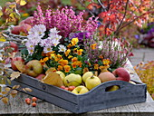 Autumn arrangement on wooden tray viola cornuta