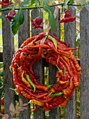 Wreath of hot peppers 'Lombardo' (Capsicum) hung on a fence