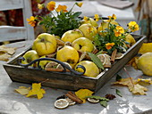 Aroma arrangement of quince, lemon slices, cinnamon sticks and bay leaves