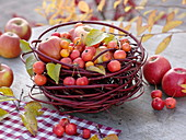Apples and ornamental apples, in a Cornus alba 'Sibirica' nest