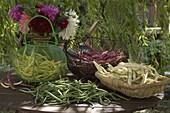 Various types of freshly harvested beans