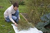 Woman picking coriander seeds (cilantro)
