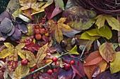 Stillleben mit herbstlichen Blättern und Beeren
