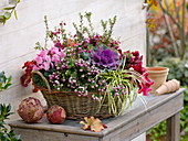 Basket planted autumnally, Pernettya, Brassica