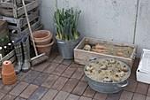 Embed vegetables in sand for storage