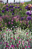 Allium giganteum 'Ambassador' (Zierlauch), Achillea 'Kirschkönigin', Lychnis coronaria (Vexiernelke), Digitalis (Fingerhut), Rosa (Rosen)