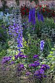 Delphinium elatum 'Lanzenträger' (Rittersporn), Erigeron 'Dominator' (Feinstrahlaster), Allium (Zierlauch)