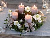 Noble Advent wreath from Pseudotsuga, Viscum albus