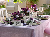 Christmas table decoration with African violets