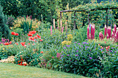 Cottage Garden: THE HERBACEOUS BORDER at GREENHURST Garden, Sussex, with POPPIES, Lupinus AND Centaurea Montana