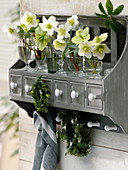 Helleborus niger flowers in small glasses on the wall board
