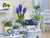 Blue flowers in white pots