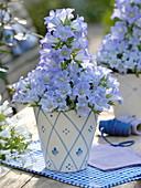 Campanula Mee 'Crownprincess' (Glockenblume) in blau-weißem Übertopf