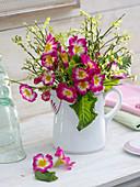 Primula (primrose), Vaccinium (blueberry)