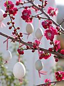 Prunus persica 'Melred' (ornamental peach) with red flowers