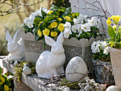 White-yellow easter decoration flower box with viola cornuta