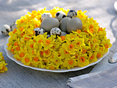 Potted daffodil wreath as easter nest