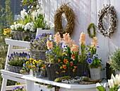 Hyacinthus (hyacinth), Anemone blanda (ray anemone)